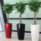 Beat the Office Blues with 3 Easy House Plants